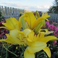 цветы :: Валерий A.