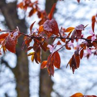 весна :: николай и наталья