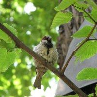 И в Летний сад гулять летал... :: Сергей Трусов