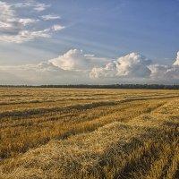 Вечер в поле :: Эркин Ташматов