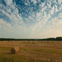 Снова август :: Алексей Кошелев