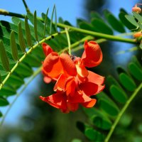 Радость жизни в цвете :: Александр