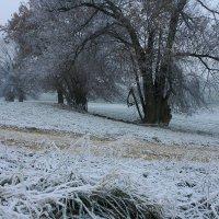 Зимняя сказка :: Elena Wymann