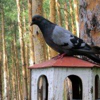 Лесной гость . :: Мила Бовкун