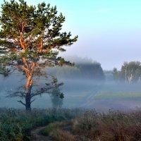 Утро. Первые лучи солнца. :: Геннадий Ячменев