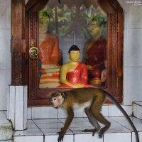 Будда и обезьяна. :: Edward J.Berelet