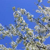 Цветочный хоровод-431. :: Руслан Грицунь