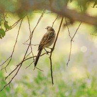 Из жизни птиц. Мечтает. :: TATYANA PODYMA