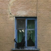 А белый кот испугался... :: Фёдор Куракин
