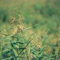 Трава у дома :: Олег Обухов