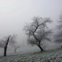 пьяные деревья :: Elena Wymann
