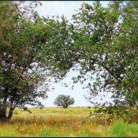 Деревья :: TATYANA PODYMA