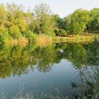Зеленое озеро :: Светлана Казмина