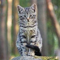 Котёнок :: Валерия Сушенкова