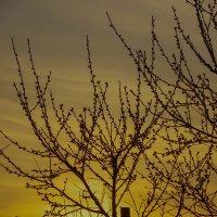 закат3 :: Олеся Енина