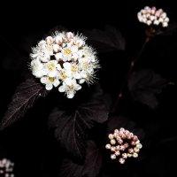 Просто цветок :: Ирина
