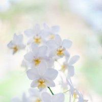 Белая орхидея :: Алексей Мартынов