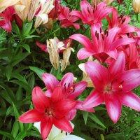 Что может быть прекраснее цветов!!! :: раиса Орловская
