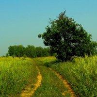 Деревце :: Милла Корн