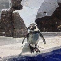 Пингвинарий в парке РИВЬЕРА Сочи :: Tata Wolf