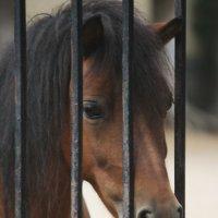 horse :: Аліна Павлючик