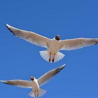 чайки :: Валентин Кошелев