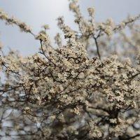 Цветочный хоровод-445. :: Руслан Грицунь