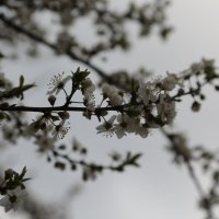 Цветочный хоровод-444. :: Руслан Грицунь
