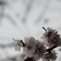 Цветочный хоровод-443. :: Руслан Грицунь