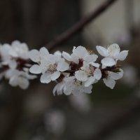 Цветочный хоровод-442. :: Руслан Грицунь
