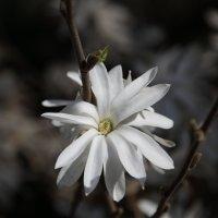 Цветочный хоровод-448. :: Руслан Грицунь