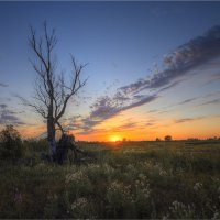 Скудная природа Астраханской области :: Nikita Volkov