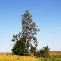 Одинокое дерево :: Damir Si