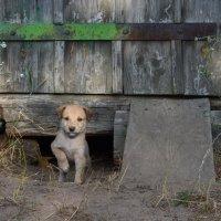 Раз собака :: Ирина Шакирова