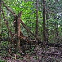В лесу :: Rabbit Photo