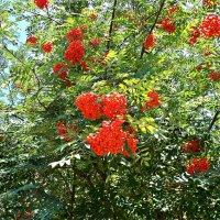 Скоро осень, за окнами август..... :: Валерия Комова