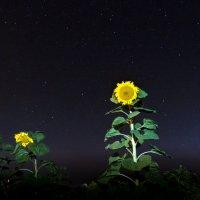 Подсолнух и звездное небо :: Bulat Ziganshin