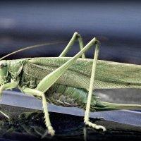 Grasshopper :: Андрей Смирнов