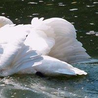 Крылья,словно паруса! :: Наталья