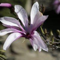Цветочный хоровод-454. :: Руслан Грицунь