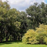 Ботанический сад :: Дмитрий Конев