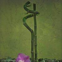 Орхидея и бамбук :: Ирина Приходько