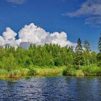 Озеро Даниковское :: Валерий Талашов