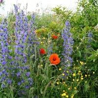Июньское цветение :: Natalia Harries