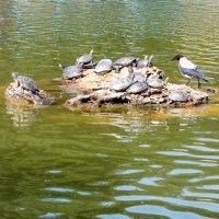 Черепаховый остров со смотрящим :: Александр Скамо