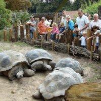 Галапагосские черепахи :: Lüdmila Bosova (infra-sound)