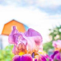 Цветок :: Олег Гаврилов