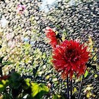 В брызгах солнца и воды :: Геннадий Храмцов