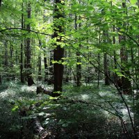 В лесу. :: Маргарита ( Марта ) Дрожжина