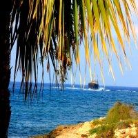 И я хочу в Бразилию к далеким берегам... :: boris kantor